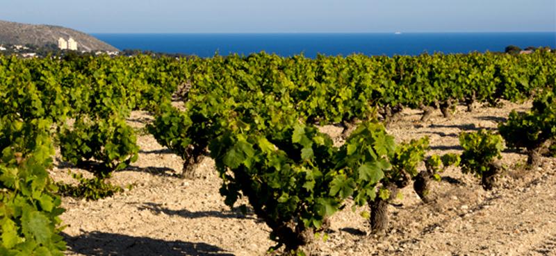Casa Girasol Holiday home Moraira vineyards